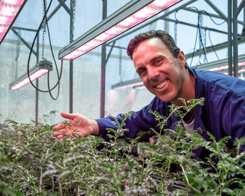 Research to boost pulse crop development