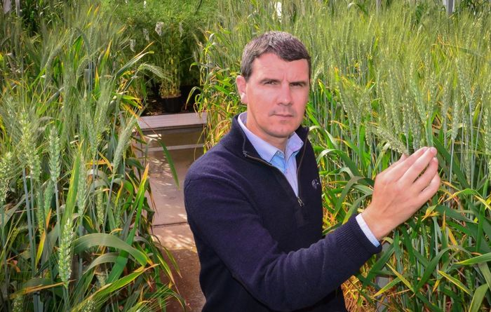 New wheat variety offered by AGT