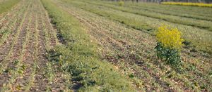 Record keeping important for frost and drought affected crops
