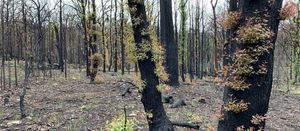 CSIRO Citizen Bushfire project launched