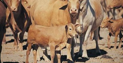Increasing herd profitability