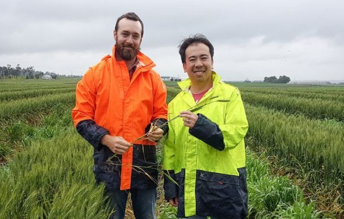 Russian wheat helping Aussie research