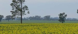 GM crop ban lifted in South Australia