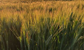 WTO action taken over barley dumping claims