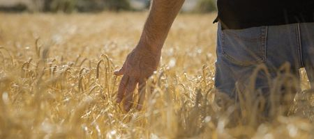 Weeds cost farmers $13m a day