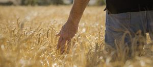 Dry July shoots farmer's confidence