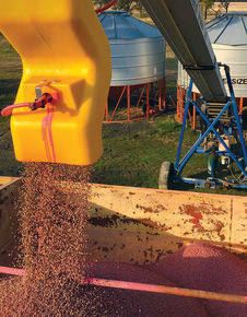 Research Report: Planting seed treatments