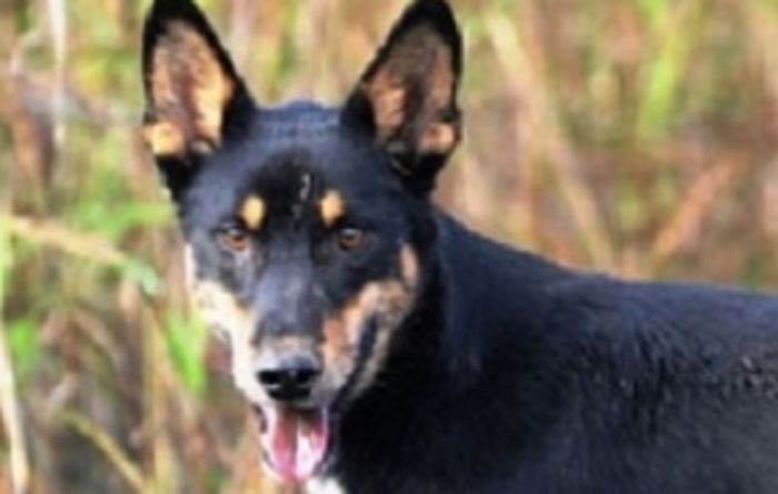 Technology useful for curbing wild dogs