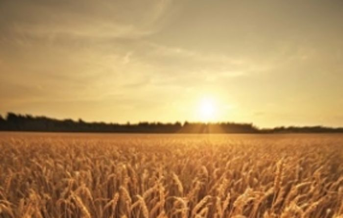 Latest crop report delivers good news; optimism for summer