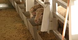 Controversial live export footage questioned