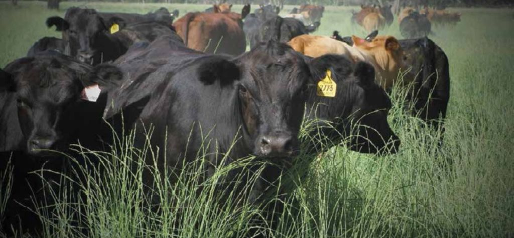 Pasture benefits of going native