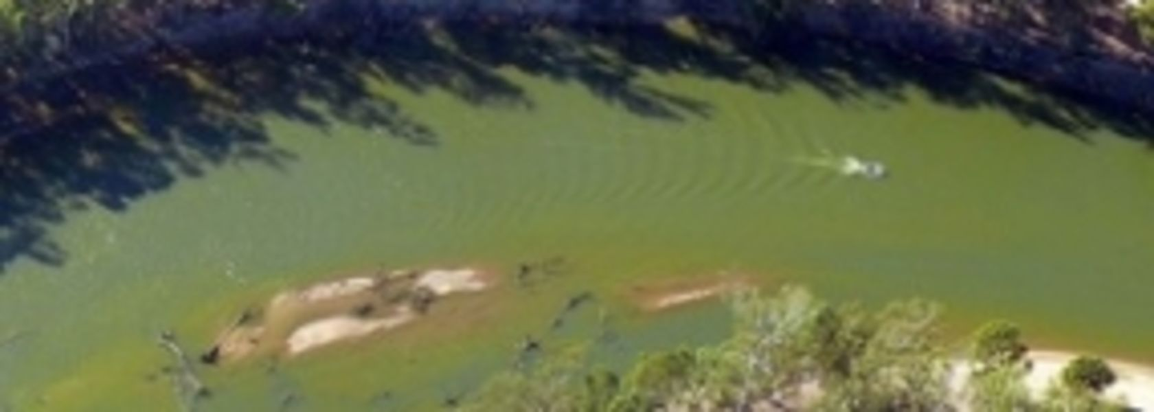 Algal bloom hurts farmers in Victoria