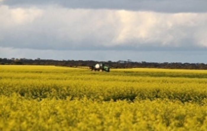 Canola production hits highs