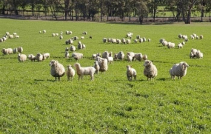 Launch of livestock biosecurity network