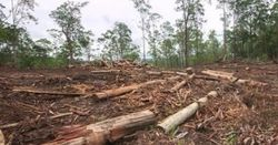 Qld land clearing laws fail, farmers relieved