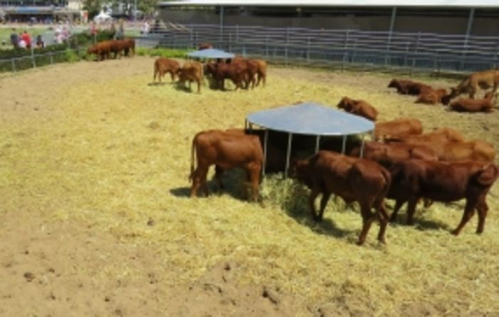 Mixed outlook for Australian beef sector