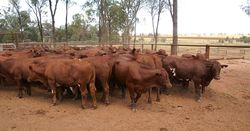 WAFarmers supports decision on live exporter