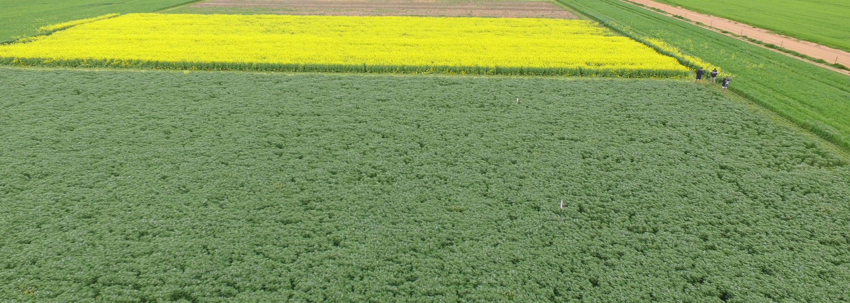 Long-term research yields some herbicide resistance answers