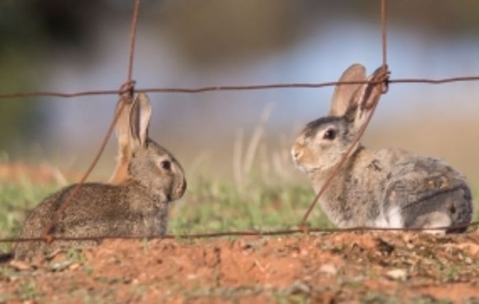 Hunt on for rabbit biocontrol release sites in WA