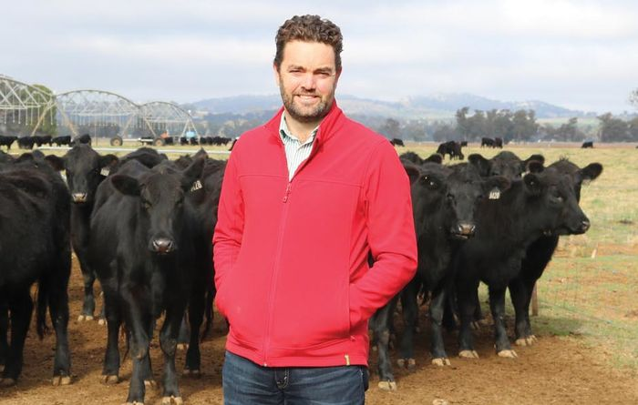 Top tips for cattle on grazing dual-purpose crops