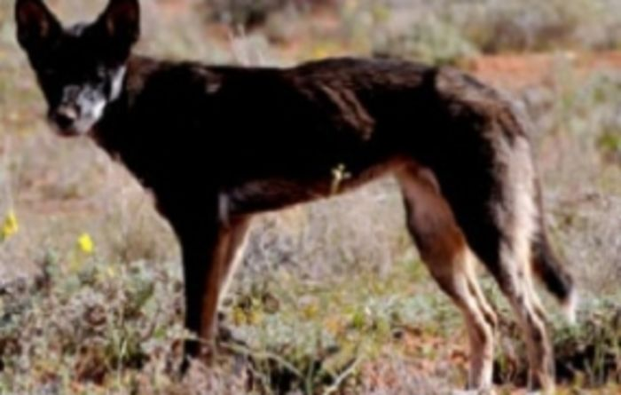 Wild dogs taking financial, social, emotional toll