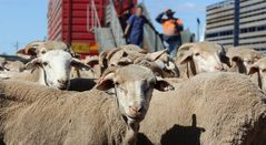 Live export trade welcomes election result