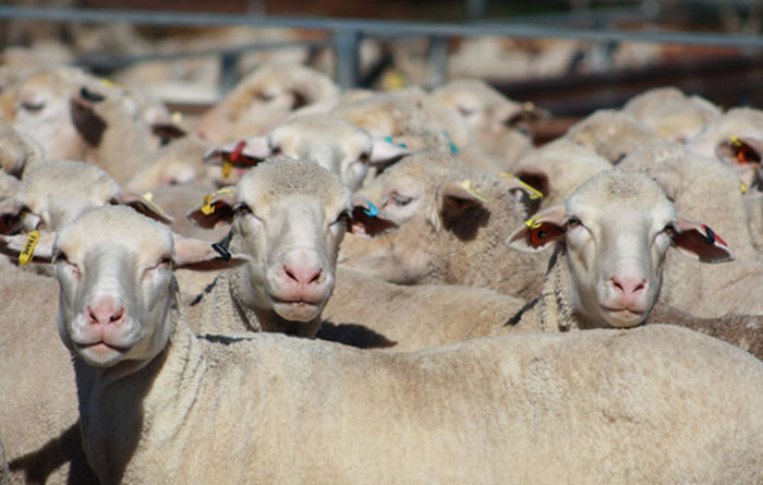 Red meat export values jump