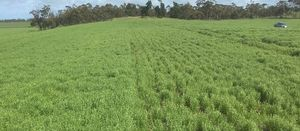 Chicken litter helping sandy soils in South Australia