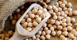 Wild chickpea may hold genetic key to new super varieties