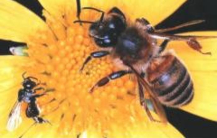 Social network of bees and wasps investigated