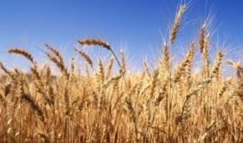 Trade deal expands Aussie grain