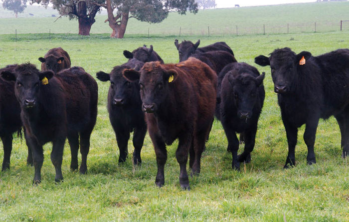 Chinese demand for red meat remains strong