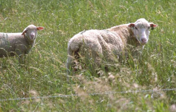 Sheep and beef producers to win in 2019