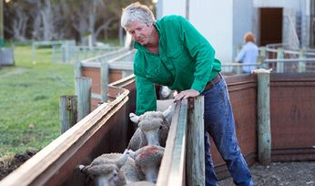 Heavier lambs and more pasture thanks to training