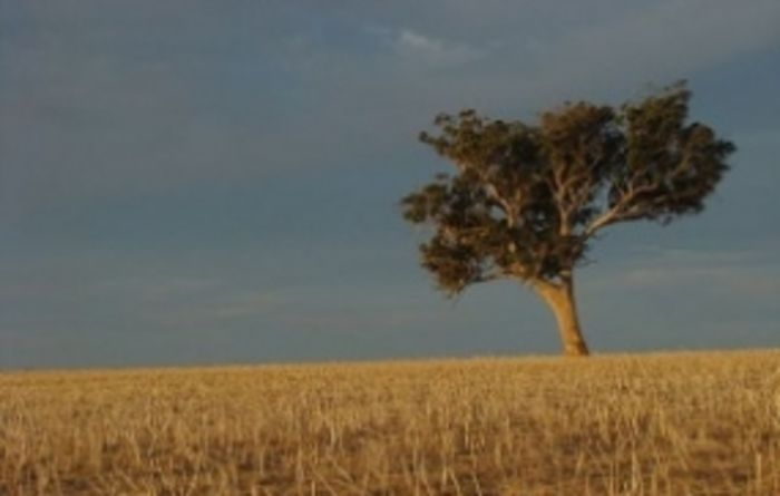 Calls for WA drought plan