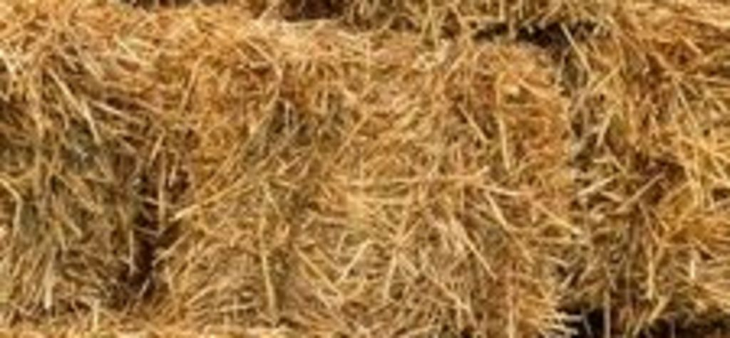 Rains lead to dangerous mouldy hay