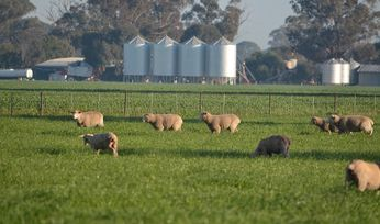 Biosecurity survey goes on line