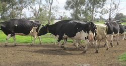 Dairy industry works on code of conduct