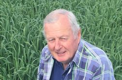 Forage oat with enhanced yield developed in Queensland