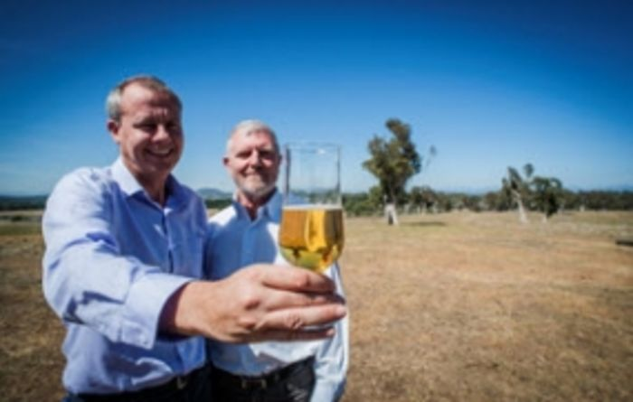 World-first gluten-free barley beer takes Germany by storm