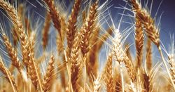 Wheat Quality Australia's latest Master List released