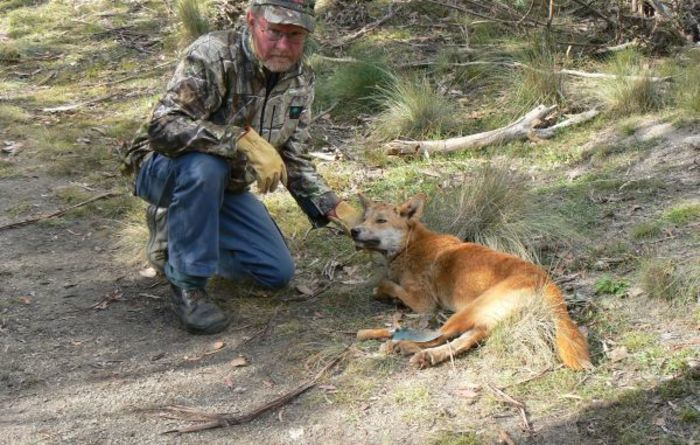 Wild dog fight continues in Vic