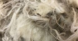 Survey to help shape wool's future
