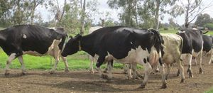 NSW Farmers pleased with ACCC dairy investigation