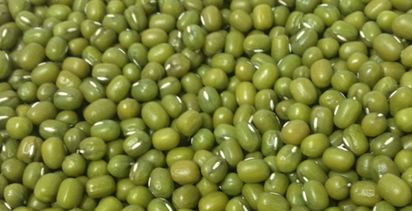 App to help mungbean disease now available