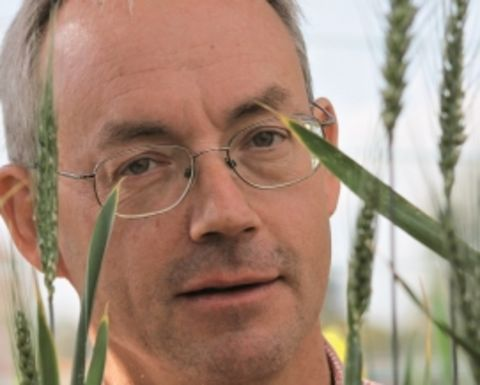 Rust findings highlight need for grower vigilance