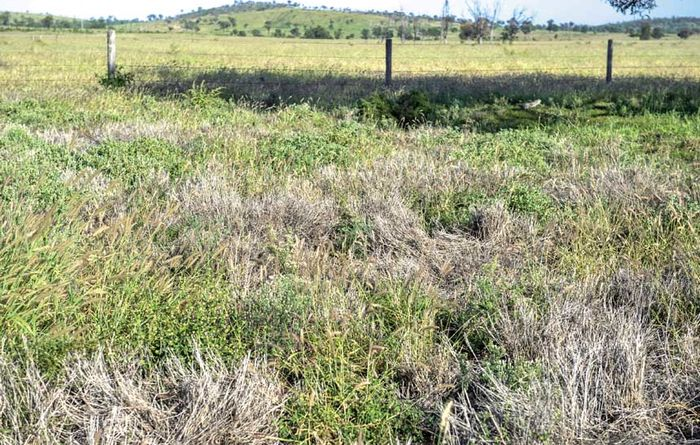 Pasture dieback remains a mystery, for now