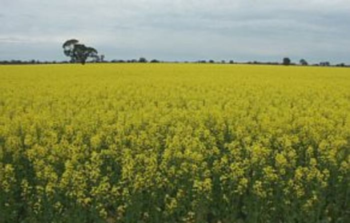 Diagnostic service can now test for Sclerotinia