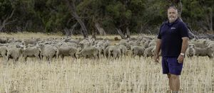Specialist Merino flock for sale