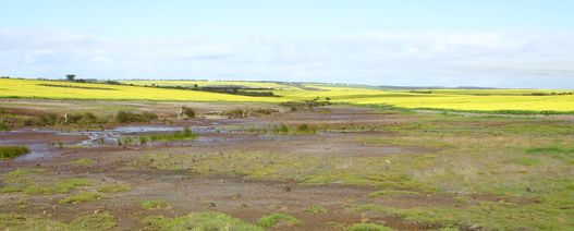 WA research shines a light on salty soil sensitivity
